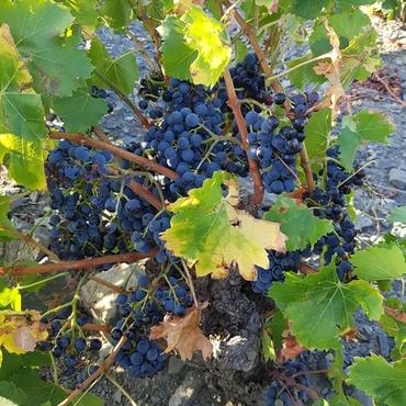 Domaine De Las Coumes, producteurs de vins à Cases-de-Pêne
